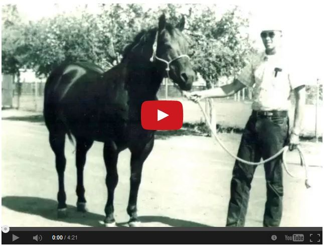 Poco Bueno – Quarter Horse stallion (1944-1969). Here is a rare video of this legendary stallion who left a huge mark on Quarter Horse history! How many of you have descendants of this stalli…