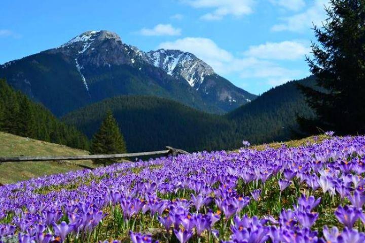Tatra Valley Chochołowska Crocuses In Poland   Dream Destinations    Pinterest   Poland And Destinations Amazing Ideas