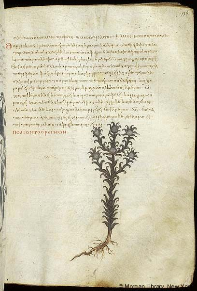 De materia medica, MS M.652 fol. 136r - Images from Medieval and Renaissance Manuscripts - The Morgan Library & Museum