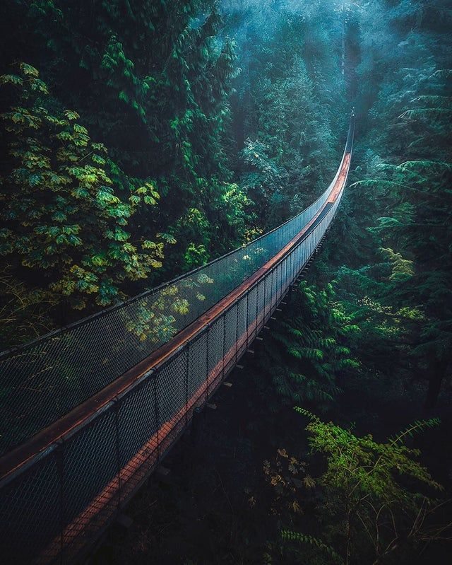 Capilano Suspension Bridge In Vancouver Mostbeautiful In 2020