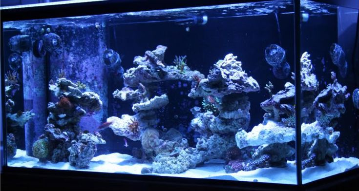 12 best images about Aquascaping Ideas on Pinterest ...