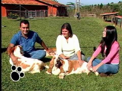 Familia Basset Hound: Um programa de tv sobre a raça basset hound, imper...