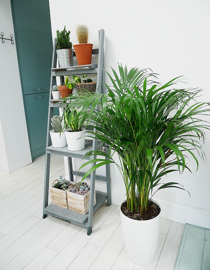 Die besten 25+ Palmen pflanzen Ideen auf Pinterest Plakat, Ram - tipps pflege pflanzen wintergarten