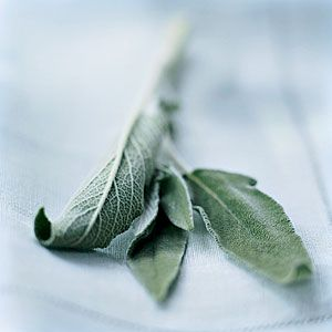 Fall Produce Guide | Sage | CookingLight.com. Sage's long, narrow leaves have a distinctly fuzzy texture and a musty flavor redolent of eucalyptus, cedar, lemon, and mint. There are some other varieties of sage that boast a slightly different flavor: purple, pineapple, peach, and honeydew melon.