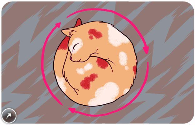 """Сон в идеальной окружности. """"Эксперты"""", говорят: Сон в кругу сохраняет тепло тела.  Правда: Время циклично, и никто не понимает это лучше, чем кошки. Когда ваша кошка спит, свернувшись в кружок, это признак того, что время этого мира заканчивается и уступает место большей, более грандиозной вселенной."""