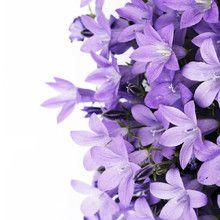 Fototapet - Purple Flowers