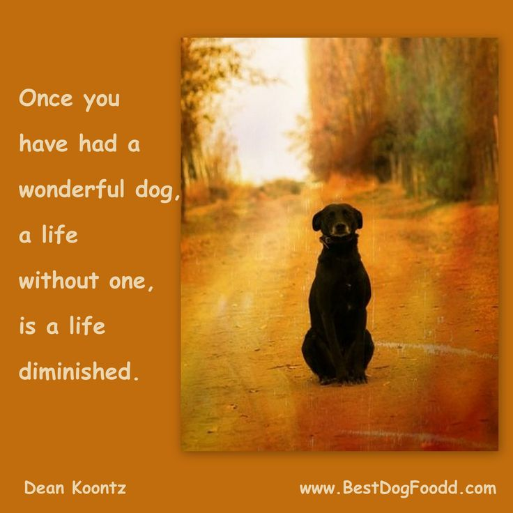 Once you have had a wonderful dog, a life without one is a life diminished.