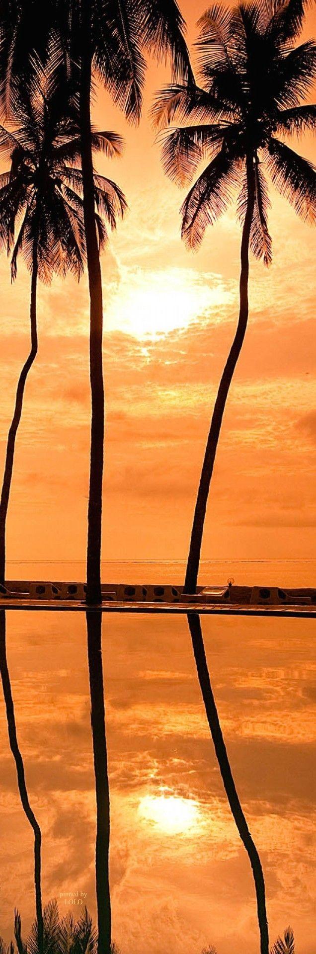 Hawaiian Sunset | LOLO