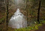 Washington, Southwestern, Battleground.  East Fork of the Lewis River on a rainy day in winter.