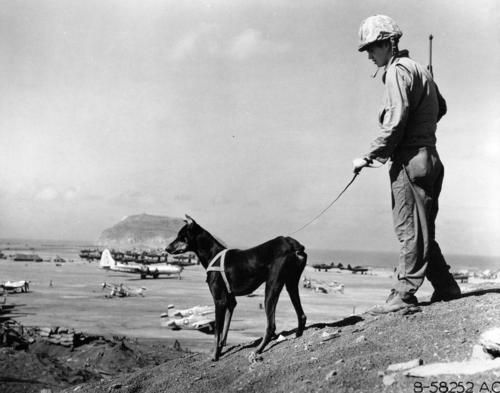 6th war dog platoon on Iwo Jima. How do I know this, you ask? That is Mount Suribachi in the background. Any Marine worth his salt can tell you that.