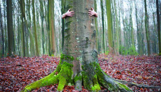 Sustainability, Deep Ecology, & the Sacred   Spiritual Ecology