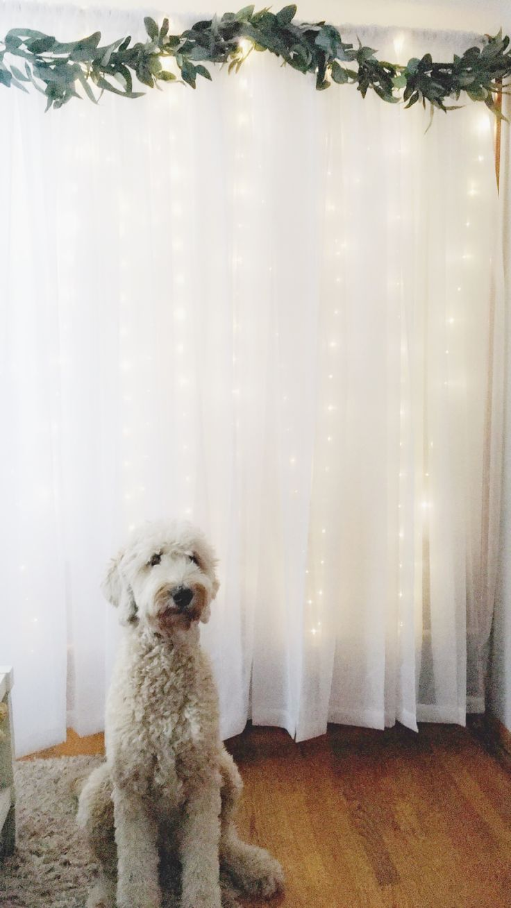 Make your own simple and beautiful photo booth backdrop