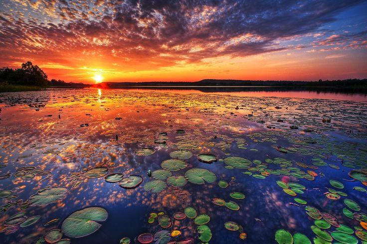 Lilypads and an orange sunset
