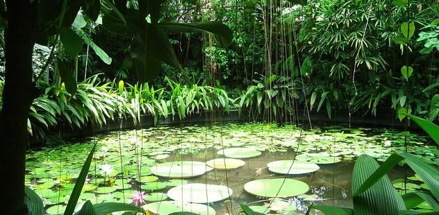Things To Do in Bogota – Jardin Botanicá