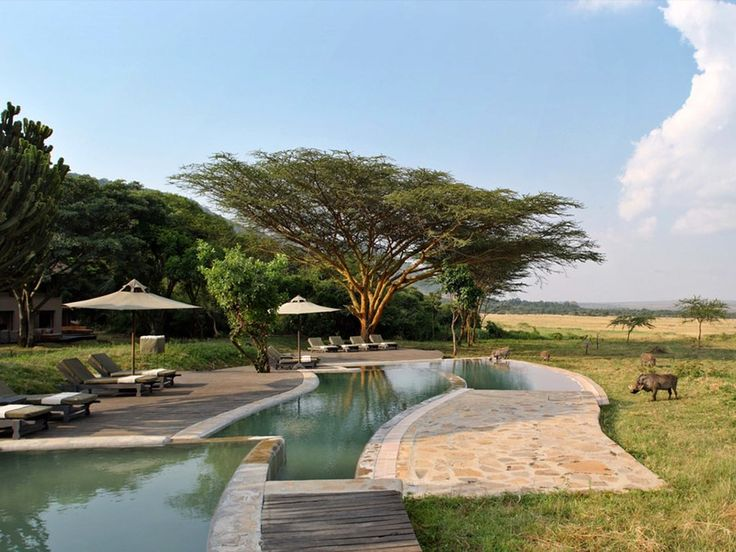 """""""At first glance, Kichwa Tembo (from $330 per person per night) feels more like a hotel you might find in Palm Springs than a safari lodge, with its sexy lounge area, open-air restaurant, and luxurious swimming pool—save for the warthogs that roam the property and expansive views of the Mara plains. The tents themselves, which blend modern utility with just enough colonial luxe, are ideal for families. The secret USP: its proximity to the Mara Triangle—one of the more people-empty…"""