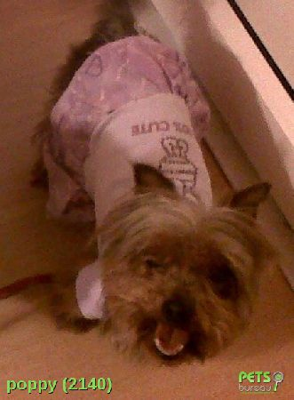 Please help us find Poppy the Dog missing in the de24 area. For more details click http://j.mp/10CbtdS