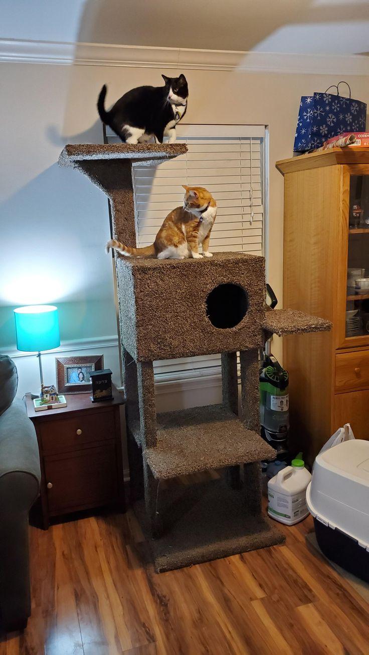 For Hanukkah I made my cats a new Cat Tree/Kitty Condo! I