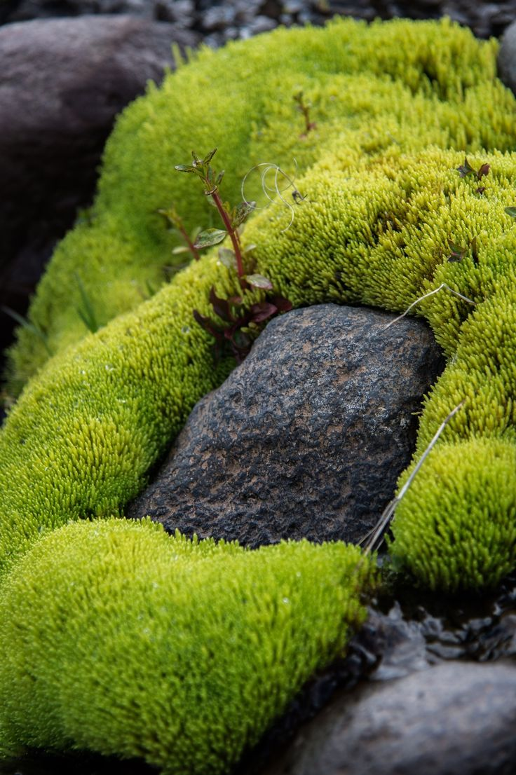 Icelandic Moss (Photo by NORTHLANDSCAPES – Jan Erik Waider) – @JanWaider