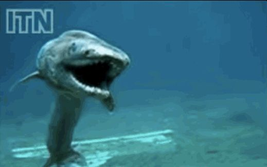 12 Creatures That Prove The Deep Sea Is The Scariest Place On Earth - This is a Frilled Shark