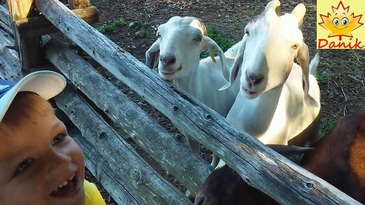 🍁 На ферме: домашние животные, собираем ягоды голубику. На детской игров...