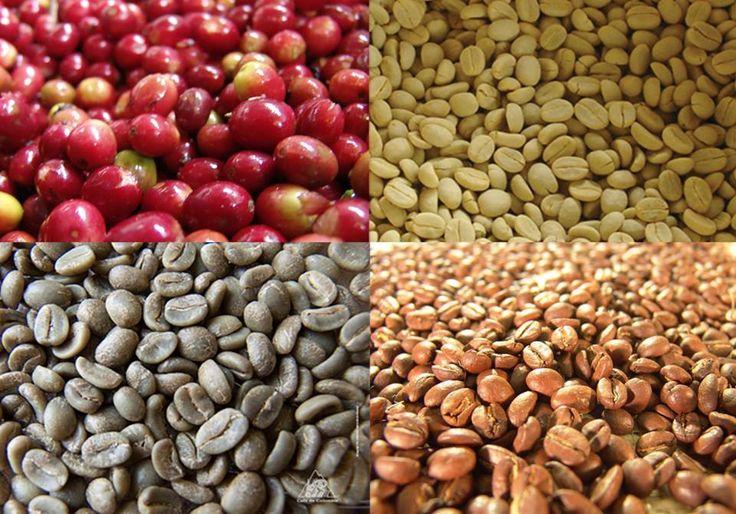 Coffee - Café - Green Coffee - Café Verde  www.comprarcafeverde.es
