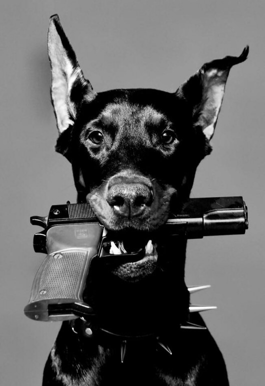 I have a dobie and a gun, i'd advise you to walk away...