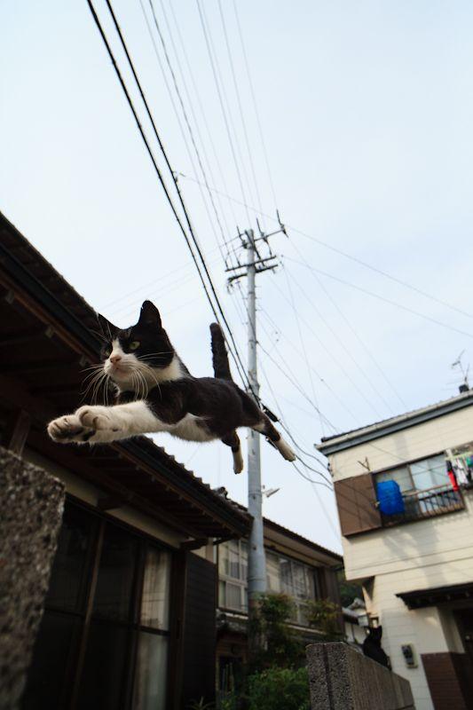 Photographer Fubirai Captures Cat Heaven on Japanese Island | Catster