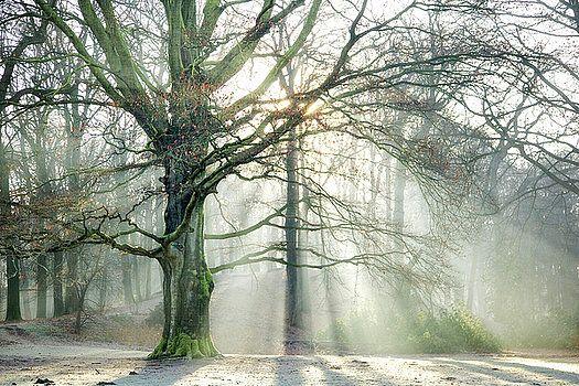 Lars Van de Goor - Winter Glow