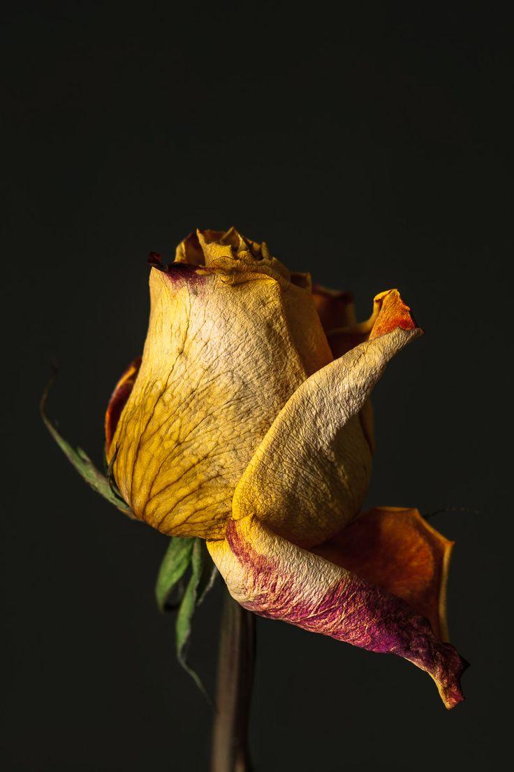 """Mackenzie Franklin: Dieses Bild steht für """"Enervate"""", weil die Blume verwelkt und an Kraft verliert."""