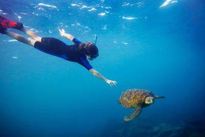 Underwater chases! By Sandy Nicholson
