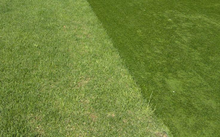 Искусственный газон на садовом участке. Преимущества и недостатки. Технология укладки.