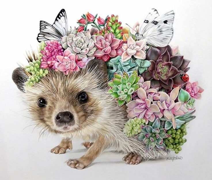 Hedgehog by Kelly Lahar