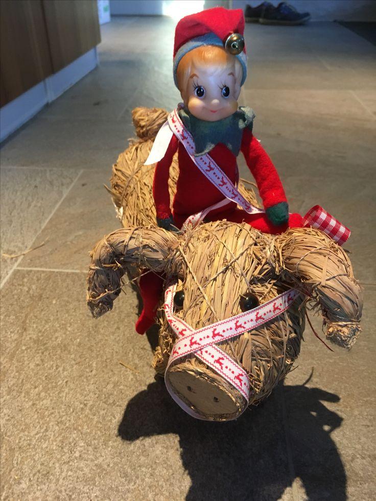 6. Dec.  Julius tager sig en ridetur på grisen