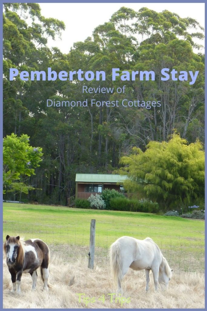 So many different animals at this Pemberton farm stay in Western Australia.  Read this accommodation review to discover if the Diamond Forest Cottages is the right place for your family trip with kids | #FamilyTrip #Pemberton #SouthWestAustralia https://www.traveltips4trip.com/pemberton-farm-stay-review-diamond-forest-cottages/