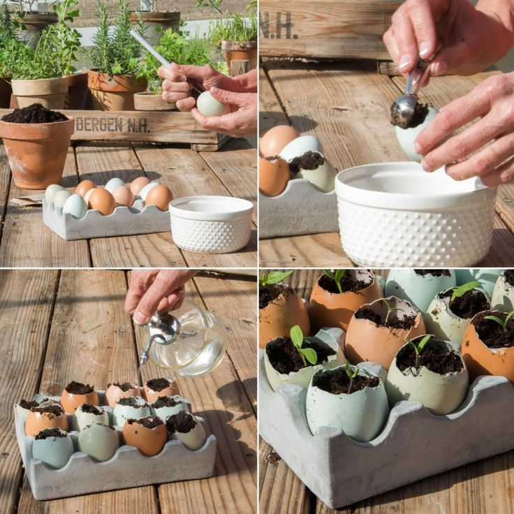 16 best garden images on pinterest diy plant your own seedlings do it yourself spring project seedlings garden solutioingenieria Images