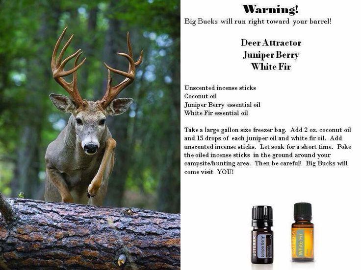 Deer attractant