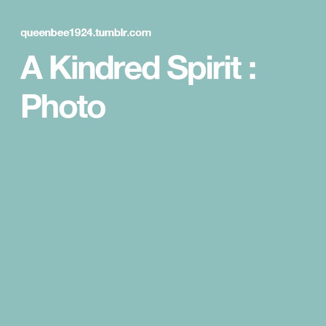 A Kindred Spirit : Photo