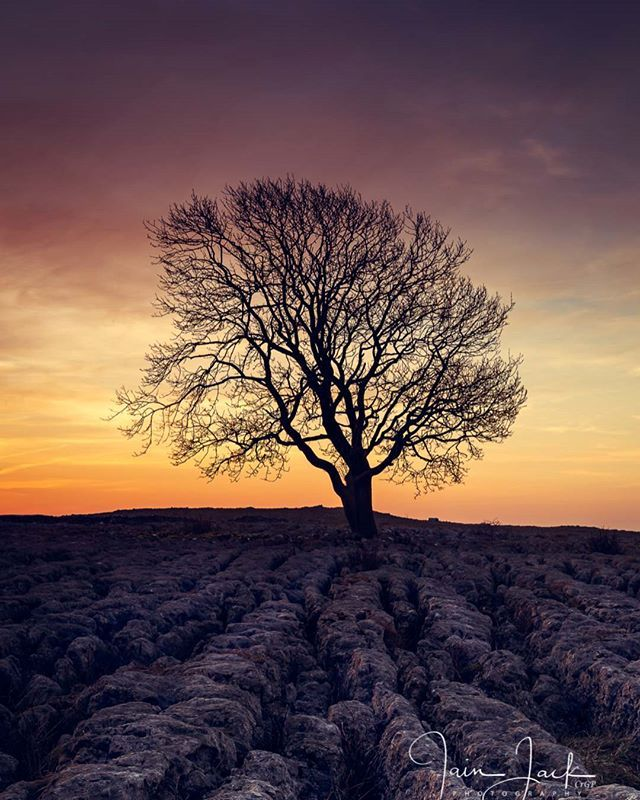 Before Sunrise At The Lone Tree In Malham Landscapephotography Landscape Landscapes Tree Trees Malham Nationalpark S Lone Tree Before Sunrise Instagram