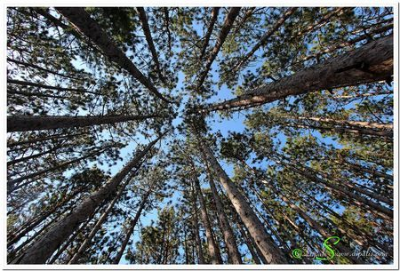 Tree canopy Photo by Dipali S. -- National Geographic Your Shot
