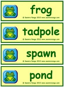 Flashcards to teach the life cycle of the frog