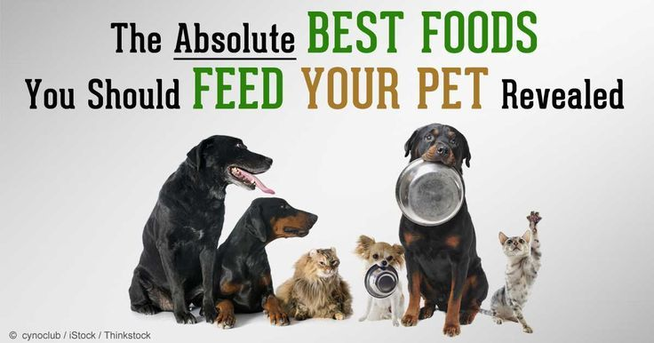 Dr. Becker and Pol Sandro-Yepes talk about making homemade dog food, citing the pros and cons of preparing homemade pet food. http://healthypets.mercola.com/sites/healthypets/archive/2014/08/17/homemade-dog-food.aspx