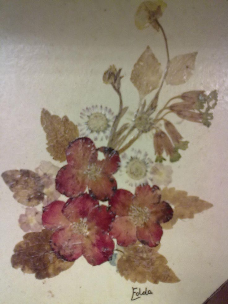 17 Best Images About Pressed Flowers Crafts On Pinterest