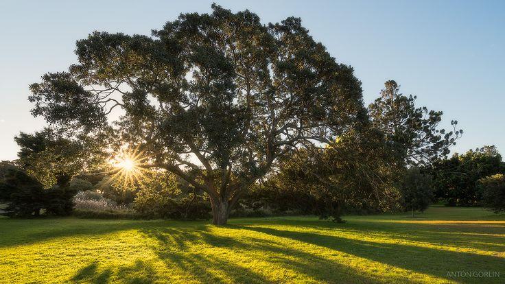 I had a lyrical mood and wanted some good vibes -- Centennial Park Sydney [OC][OS][1600x900] @antongorlin
