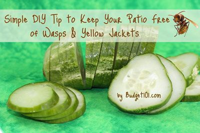 cucumber slices placed on an aluminum pan around porch will wasp & yellow jacks flee the area....must try