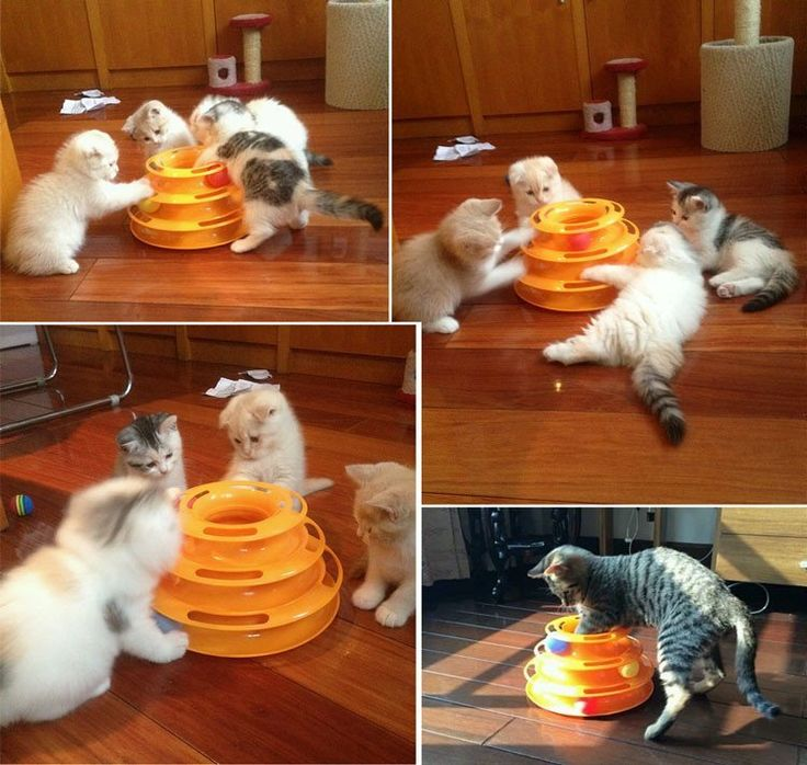 Interactive Three Level Cat Toy