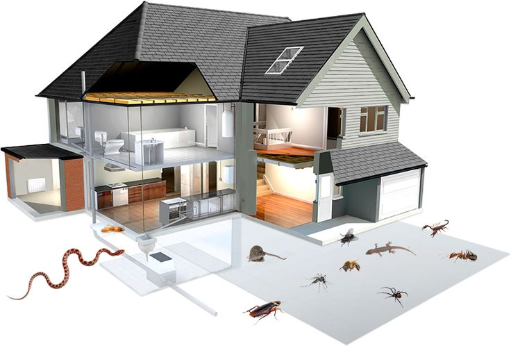 How to Calculate the Price of Building and Pest Inspection Service - Mogul