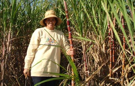 Arbeiterin im Zuckerrohr-Feld
