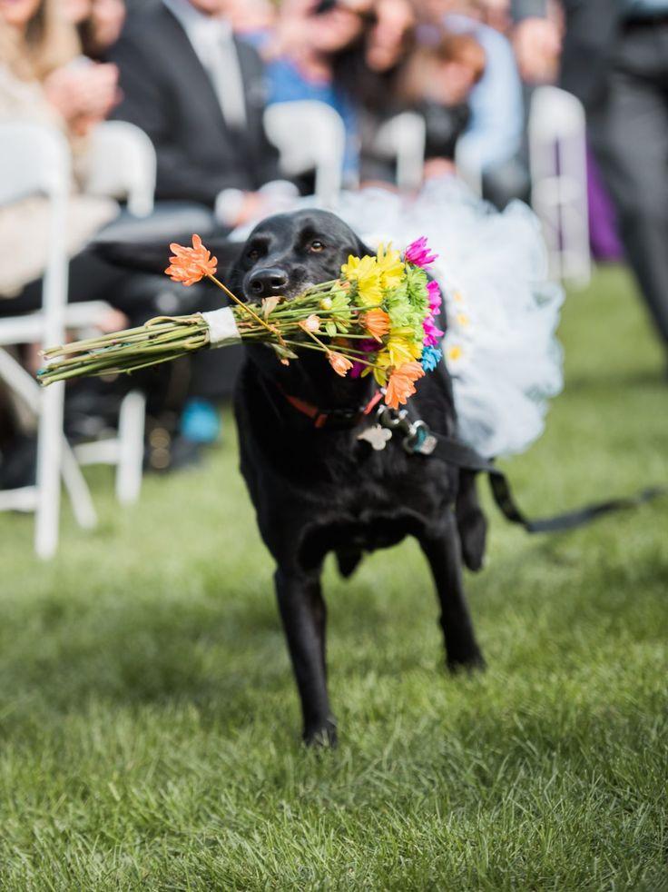 A Perfect Wedding Day In Colorado Wedding Pets Flower Girl Dog Perfect Wedding