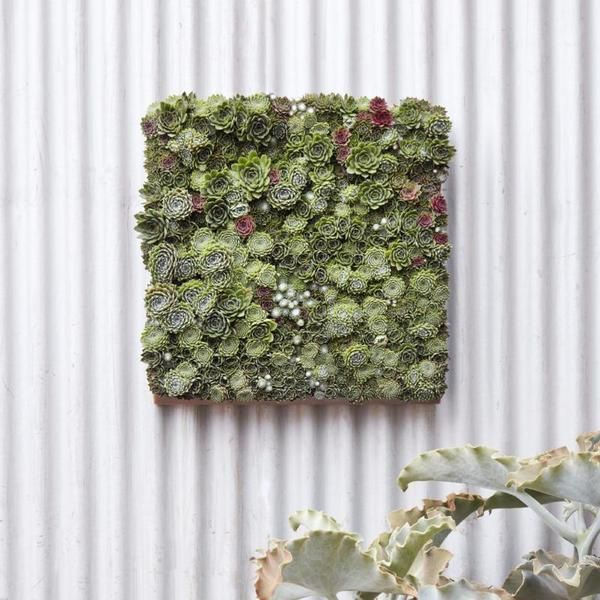 Modular Living Wall Panel Kit Succulents Diy Succulents Garden Home Garden Store