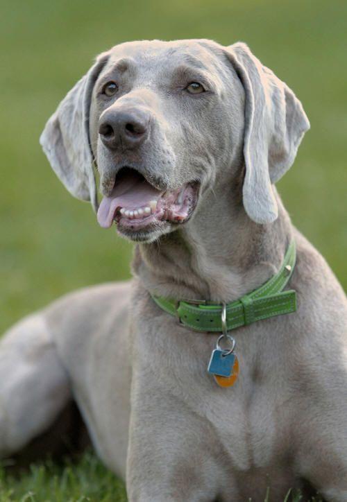 Se tem uma cadela lá em casa, estas informações vão ser-lhe úteis! #cães #cachorro #animais #pets